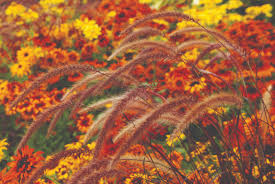 fall flowers wallpaper 48 pictures