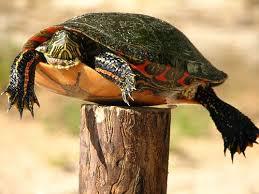 The Post Turtle Story Jaksonian Philosophy