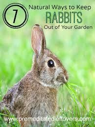 7 natural ways to repel rabbits from