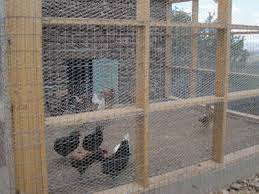 Chicken Wire Fence For Feeding Poultry Protecting Plants Prevent Animals