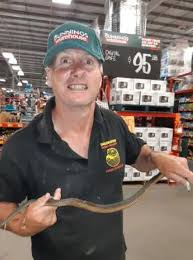 Copperhead Snake Is Found Slithering Around A Bunnings Warehouse In Melbourne Daily Mail Online