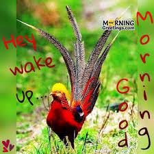 10 sweet good morning for bird