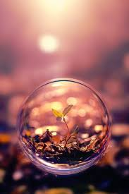 macro photography plant water bubble
