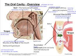 the cavity mastication l11