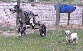 ed s wheels for pets the pet