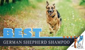 best dog shoos for german shepherds