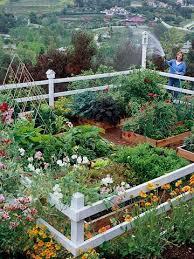 beautiful vegetable garden 43