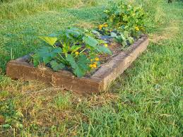 curtis and kaye absher raised bed