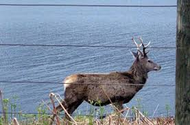 Electric Fencing Deer Fencing Advice On Energisers Wire Posts