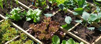 vegetable garden layout ideas for