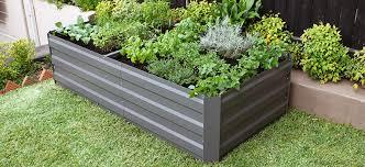 vegies in a raised garden bed