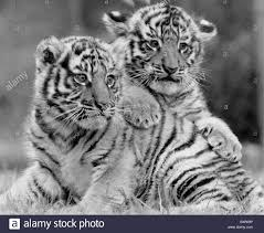 Image result for spring baby animals pictures