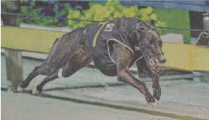 2019 Tasmanian Greyhound Hall of Fame Inductees