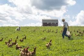 How To Establish A Small Scale Pastured Poultry Operation Rodale Institute