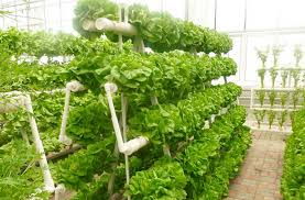 hydroponics growing system for green