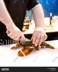 Hands of a chef cutting a fresh lobster ...