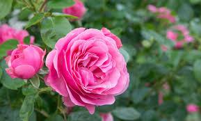 Festa della mamma: quali fiori regalare