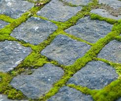 how to get rid of moss from pavers dm