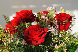 صور لـ حب ورود زهور عيد الحب باقة أزهار