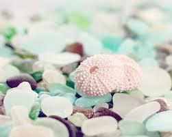 sea glass photograph sea urchin