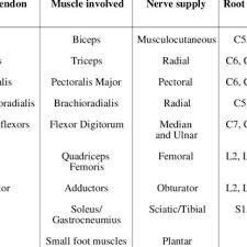 upper and lower motor neuron lesions