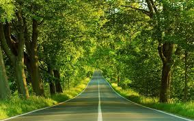 green scenery wallpapers hd wallpaper