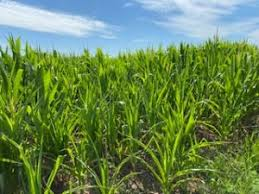 Drought Meetings to Be Offered in Central and West-Central Iowa | Western  Iowa Today 96.5 KSOM KS 95.7