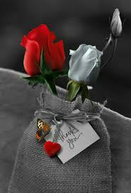 صور ورد جميل حب وأحلى صور أزهار رومانسية جديدة عالم الصور