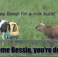 10 I Love Cows Ideas Cow Cows Funny Bones Funny