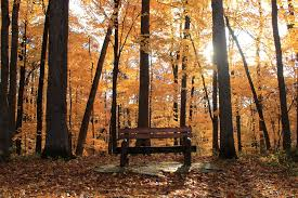 Have a seat in Autumn | An empty park bench in Palisades Kep… | Flickr