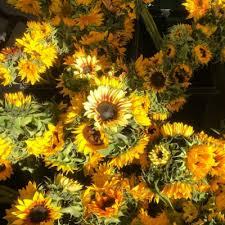 bunga matahari tumblr
