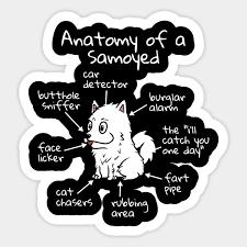 The Anatomy Of A Samoyed Samoyed Sticker Teepublic Au