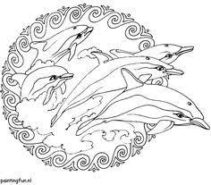 12 Beste Afbeeldingen Van Dolfijnen Dolfijnen Dieren