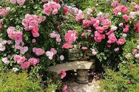 Climbing Or Rambler Roses For My Garden