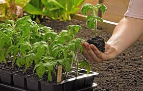 how to start seeds germinating seeds