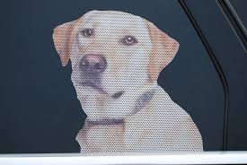 Amazon Com Doggie In The Window Car And Truck Window Dog Decal Yellow Labrador Retriever Home Improvement