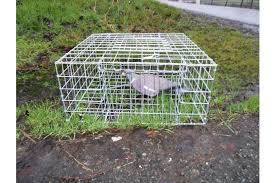 multi catch ln trap crow magpie