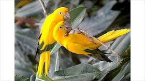 beautiful love birds images you