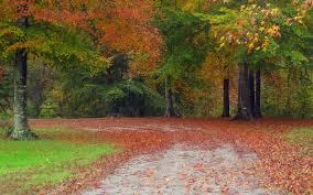 تحميل خلفيات اشجار وورود 2020 مناظر اجمل الاشجار الطبيعية