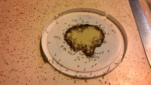 ants tering on kitchen counter