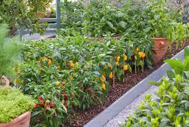 vegetable gardens images png hi res 720p hd
