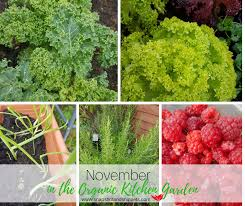 november in the organic kitchen garden