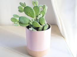 21 Best Cactus Plants To Grow In Your Garden