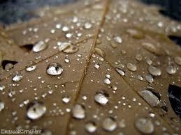 صور وخلفيات قطرات الماء على اوراق الشجر شبكة مدينة الاحلام