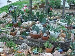 succulent rock garden ideas photograph