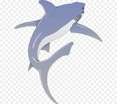 Shark Fin Background Png Download 677 800 Free Transparent Decal Png Download Cleanpng Kisspng