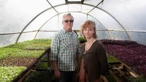 Denise Irvine visits a little Hamilton farm growing microgreens |  Stuff.co.nz