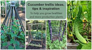 Cucumber Trellis Ideas Tips Inspiration For Vegetable Gardens