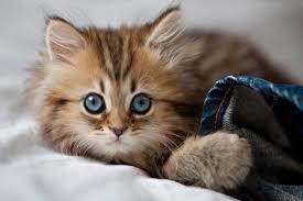 اجمل صور قطط من حول العالم مجلة البرونزية