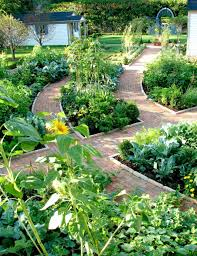 growing a vegetable garden in your backyard
